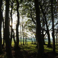 parking-wilderness-forest