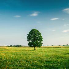 tree-field-horizon-countryside-81413