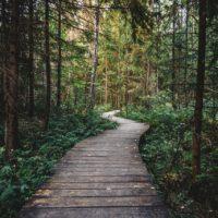 wood-nature-walking-dark